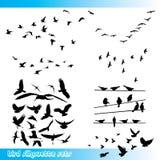 Siluette dell'uccello messe Fotografia Stock Libera da Diritti