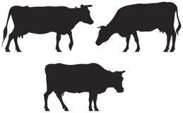 Siluette della mucca Fotografie Stock Libere da Diritti