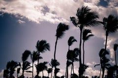 Siluette della palma Fotografia Stock