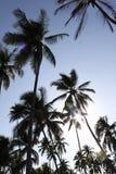 Siluette della palma Fotografie Stock Libere da Diritti