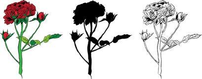 Siluette della Rosa Illustrazione di Stock
