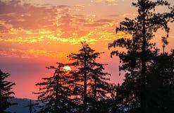 Siluette della sequoia contro arancio, rosa, rosso, cieli di marsala, re Canyon Fotografia Stock Libera da Diritti