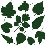 Siluette delle foglie Fotografia Stock