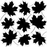 Siluette delle foglie di acero Immagini Stock Libere da Diritti