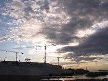 Siluette delle gru contro il cielo al tramonto fotografia stock libera da diritti