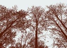 Siluette delle latifoglie nella foresta di autunno Fotografia Stock
