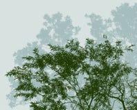 Siluette delle latifoglie nella foresta di estate Immagini Stock Libere da Diritti