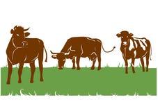 Siluette delle mucche marroni Immagini Stock
