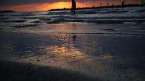 Siluette delle palme contro il mare, tramonto video d archivio