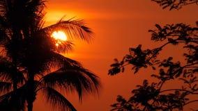 Siluette delle palme sulla spiaggia tropicale a tempo vivo di tramonto Alberi esotici e grande sole arancio stock footage