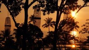 Siluette delle palme sulla spiaggia tropicale a tempo vivo di tramonto Alberi esotici e grande sole arancio archivi video