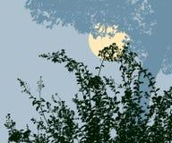 Siluette delle piante nella notte illuminata dalla luna Immagine Stock