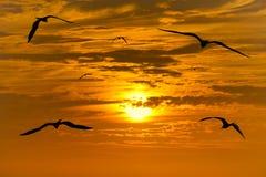 Siluette di migrazione di uccelli Immagine Stock Libera da Diritti