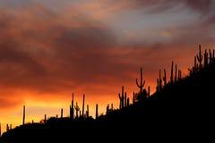 Siluette di tramonto del Saguaro dell'Arizona Immagini Stock Libere da Diritti