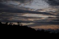 Siluette di un albero al tramonto fotografia stock libera da diritti