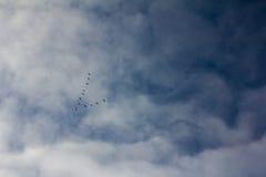 Siluette di un cuneo delle oche selvatiche di volo che formano una freccia Fotografie Stock Libere da Diritti