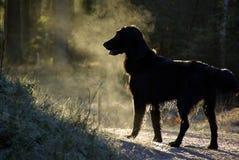Siluette dog Stock Photos