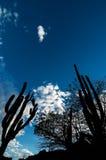 Siluette e cielo blu del cactus Immagini Stock Libere da Diritti