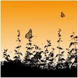 Siluette, farfalle Fotografia Stock Libera da Diritti