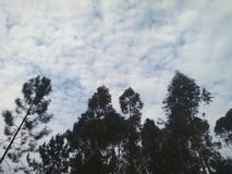 Siluette graziose degli alberi fotografia stock