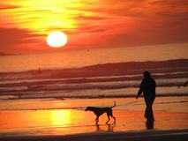 Siluette kobiety & psa odprowadzenie na plaży z zmierzchu tłem Fotografia Royalty Free