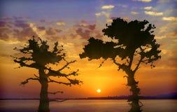 Siluette nere dei pini backlit contro il sunse luminoso Fotografia Stock