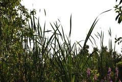 Siluette realistiche dei fiori e dell'erba sul ouette bianco del fondo dalla natura immagini stock libere da diritti