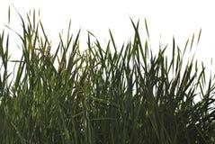 Siluette realistiche dei fiori e dell'erba sul ouette bianco del fondo dalla natura fotografia stock