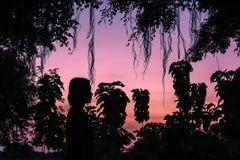 Siluette, tramonti fra gli alberi Fotografie Stock Libere da Diritti