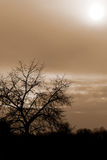 Siluette Tree And a Cloudy Red Sky Royalty Free Stock Photo
