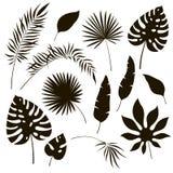 Siluette tropicali delle foglie Banana esotica della felce reale della palma del philodendron della foglia della giungla nera Ill royalty illustrazione gratis