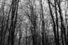 Siluette vaghe degli alberi Immagini Stock Libere da Diritti