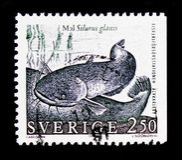 Silurus glanis del siluro, serie dei pesci, circa 1991 Fotografie Stock
