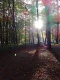 Silvan glade. Sun light ground trees boden blätter herbst sheets shadow schatten Stock Photos