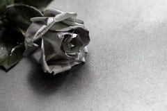 Silver rose on silver metallic background Stock Photos
