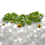 Silver background with fir branches. Stock Image