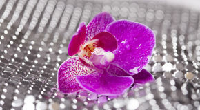 Silver background with purple orchid and water drops Stock Photos