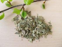 Silver Birch leaves, Betulae folium Royalty Free Stock Photography