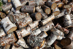 Silver birch logs cut and piled Stock Photos