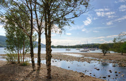Silver Birches on the shore of Coniston Water Stock Photography