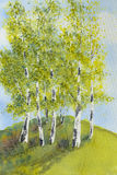 Silver birches on sunny day watercolor illustration. Watercolor of a grove of silver birch trees on a hill on a sunny summer day vector illustration