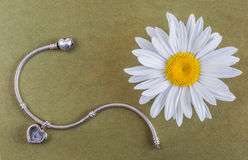 Silver bracelet and chamomile flower Royalty Free Stock Photo