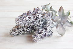 Silver branch of lilac on the table Stock Photos