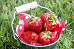 Silver bucket of strawberries Royalty Free Stock Photos