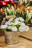 Silver bucket of white daisies Royalty Free Stock Photo