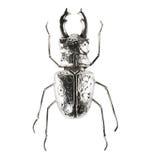 Silver bug figure. Luxury silver bug figure isolated on white background Royalty Free Stock Image