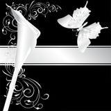 Silver calla Stock Image