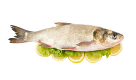Silver carp fish with lemon and greens Royalty Free Stock Images