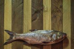 The silver carp Royalty Free Stock Photos