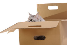 Silver cat in paper box. Stock Photo